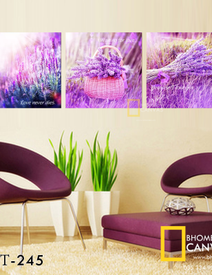 Bộ 3 Tranh Canvas Hoa Oải hương Lavender WT-245